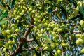 Alentejo: Produção de azeite pode parar por excesso de bagaço de azeitona